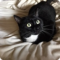 Adopt A Pet :: Morticia - Chandler, AZ