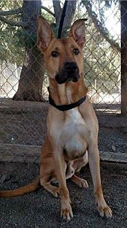German Shepherd Dog Mix Dog for adoption in San Martin, California - Rocky