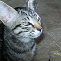 Adopt A Pet :: Kasey - Mexia, TX