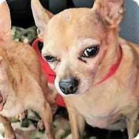 Adopt A Pet :: Ginny - Greeneville, TN