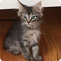 Adopt A Pet :: SHADOW - Lakewood, CA