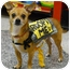 Photo 4 - Chihuahua Mix Dog for adoption in Sacramento, California - Walker 6 pounds, needs foster