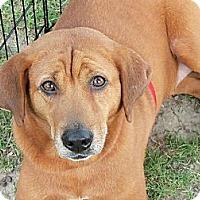 Adopt A Pet :: Ellinore -Momma - Silver Lake, WI