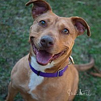 Adopt A Pet :: Zoey - Farmington Hills, MI
