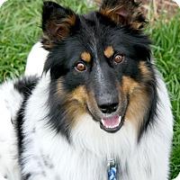 Adopt A Pet :: Gavin - Delano, MN