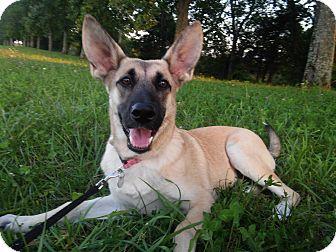 German Shepherd Dog Mix Puppy for adoption in Louisville, Kentucky - Nala