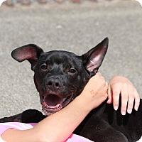 Adopt A Pet :: Hooch - Peru, IN