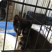 Adopt A Pet :: Super Nova - Trenton, NJ