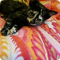 Adopt A Pet :: Tetite - Lodi, CA