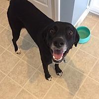 Adopt A Pet :: JoJo - Charleston, SC