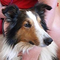 Adopt A Pet :: Marty - Salem, OR