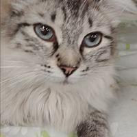 Adopt A Pet :: Sky - Ogden, UT