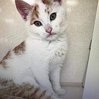 Adopt A Pet :: Banjo - Woodland Hills, CA