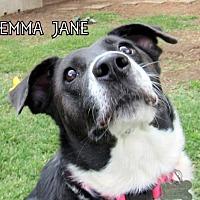 Adopt A Pet :: Emma Jane (GrandPaws) - Lindsay, CA