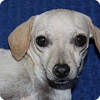 Adopt A Pet :: Colby - Phelan, CA