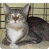 Adopt A Pet :: Little Nutmeg - Lombard, IL