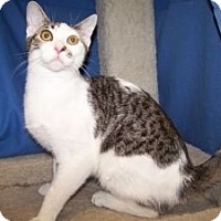 Adopt A Pet :: K-Blevin2-Dan - Colorado Springs, CO