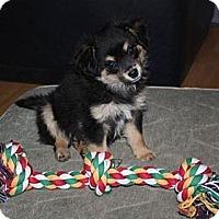 Adopt A Pet :: Regis - PENDING, in Maine - kennebunkport, ME