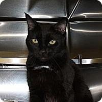 Adopt A Pet :: Cincinnati - St. Petersburg, FL