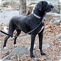 Adopt A Pet :: Filly - Martinsburg, WV