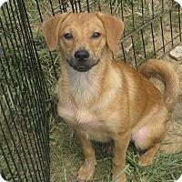 Adopt A Pet :: Ellen - Portland, ME