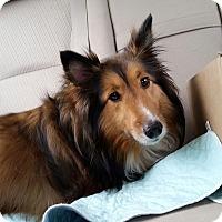 Adopt A Pet :: Suzie - COLUMBUS, OH