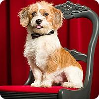 Adopt A Pet :: Happy - Owensboro, KY