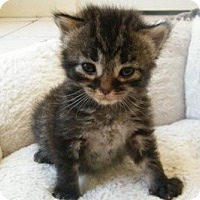 Adopt A Pet :: Augie - Orlando, FL