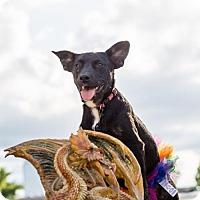 Adopt A Pet :: Missandei - Little Rock, AR