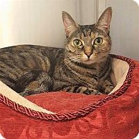 Adopt A Pet :: Mia - Umatilla, FL