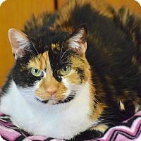 Adopt A Pet :: Arabella - Des Moines, IA