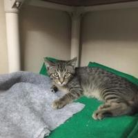 Adopt A Pet :: Clyde - Fort Collins, CO