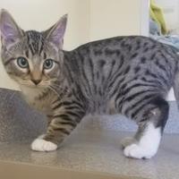 Adopt A Pet :: Elf - Larned, KS