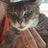 Adopt A Pet :: Woodie - Salisbury, NC