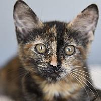 Adopt A Pet :: Picasso - Burbank, CA