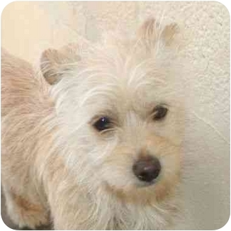 Terrier (Unknown Type, Small) Mix Puppy for adoption in Calgary, Alberta - Ginger