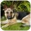 Photo 4 - German Shepherd Dog Dog for adoption in Los Angeles, California - Leila von Carson