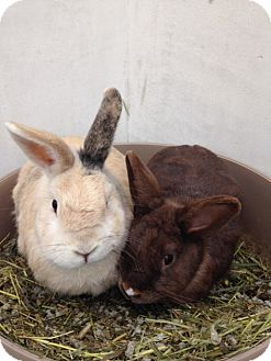 Other/Unknown Mix for adoption in Bonita, California - Scout and Coco