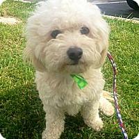 Adopt A Pet :: Marius - Encinitas, CA
