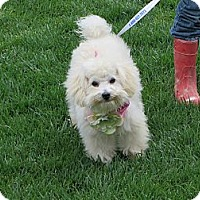 Adopt A Pet :: ** PRINCESS ELSA** - Stockton, CA