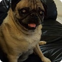 Adopt A Pet :: Chaz - Strasburg, CO