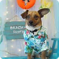 Adopt A Pet :: Rio - Chesterfield, VA
