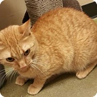 Adopt A Pet :: Marylou - McDonough, GA