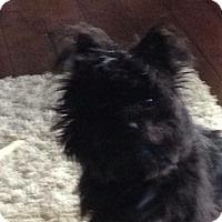 Adopt A Pet :: MacKenzie - Hixson, TN