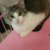 Adopt A Pet :: Minnie - mishawaka, IN