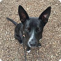 Adopt A Pet :: Zim - Meridian, ID