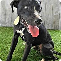 Adopt A Pet :: Rayder - Umatilla, FL