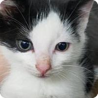 Adopt A Pet :: Rowan - Paducah, KY