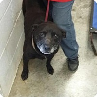 Adopt A Pet :: Jacks - Paducah, KY