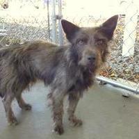 Adopt A Pet :: Smokie - Kinston, NC